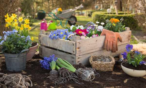 银莲花常见病虫害及其防治