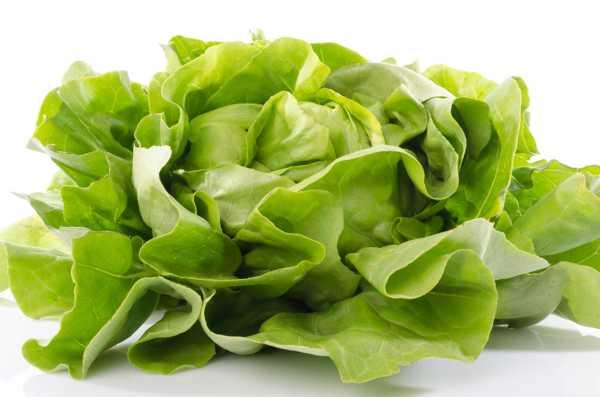 生菜是转基因蔬菜吗,如何保鲜