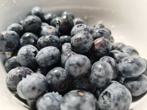 蓝莓酒的功效与作用,多少钱一瓶