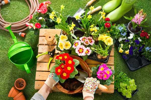 翠云草的养殖方法和注意事项