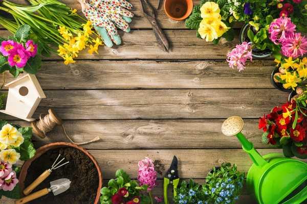 独占春的病虫害及其防治方法