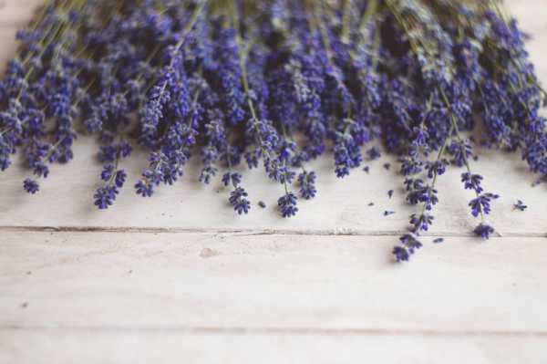薰衣草能养在室内吗,薰衣草在室内怎么养