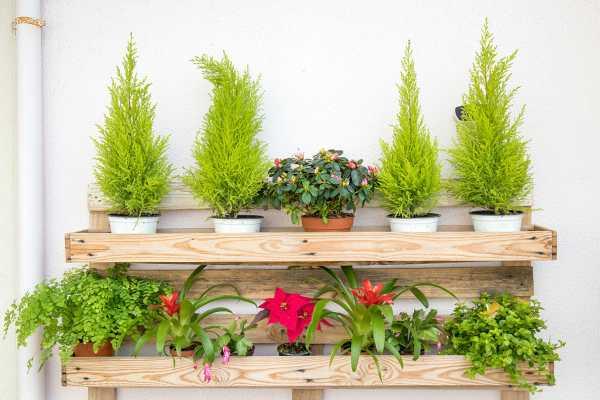 过磷酸钙适合哪些植物,怎么用最好