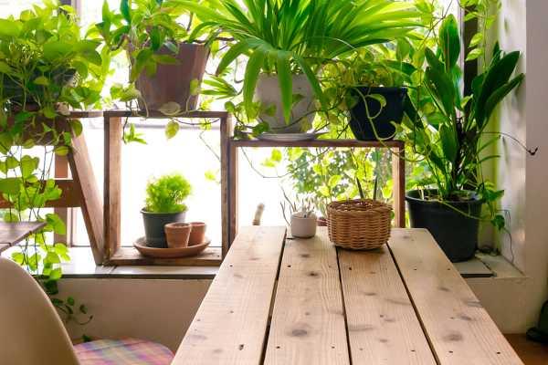 玉竹的作用,玉竹的图片