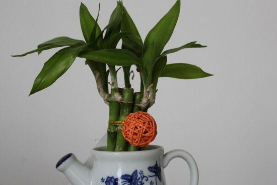 怎样使富贵竹常年浓绿