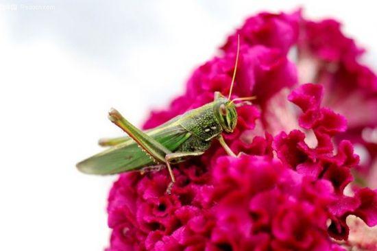 家庭中常见的日用品哪些可以用来防治花卉害虫