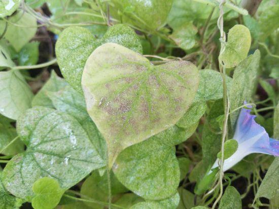大蒜养花防治害虫