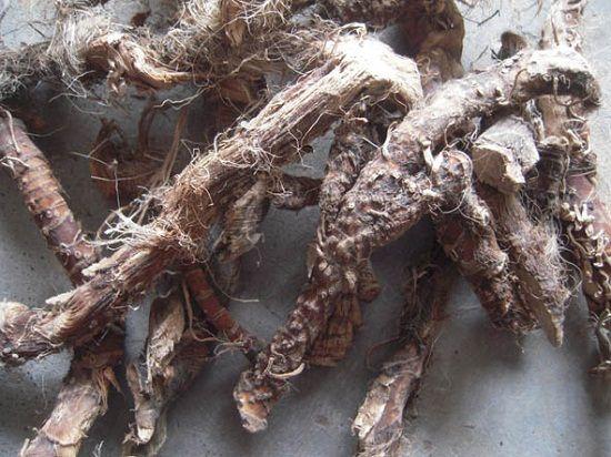 水菖蒲入药的根茎