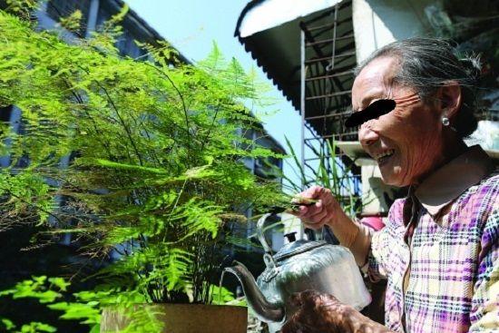 奶奶正在给文竹浇水