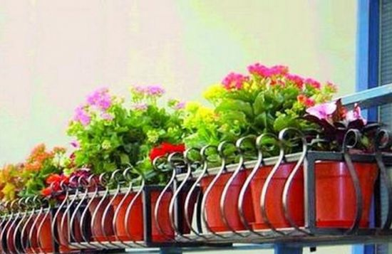阳台上养花