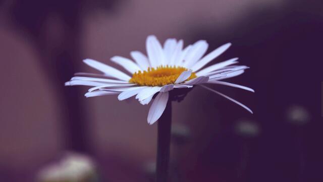代表希望的花有哪些?盘点六大代表希望的花朵