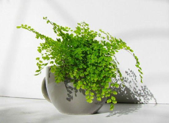 植物与光照