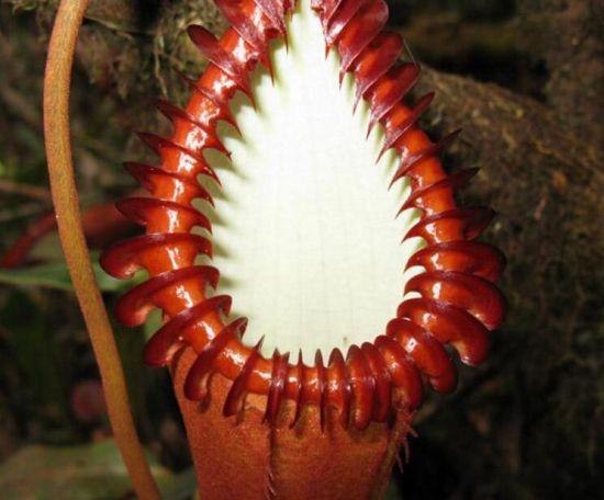 最丑最臭的植物