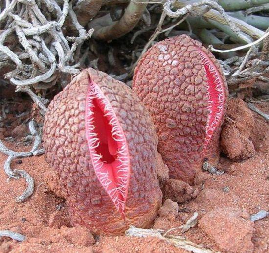 最丑的植物