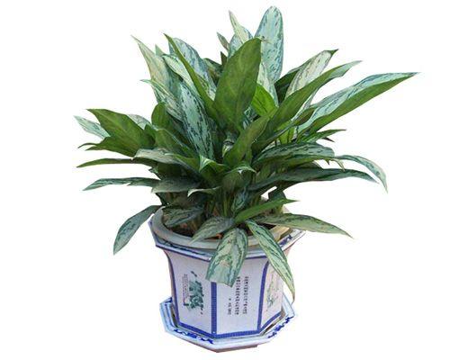 客厅和卧房不能摆放哪些植物?