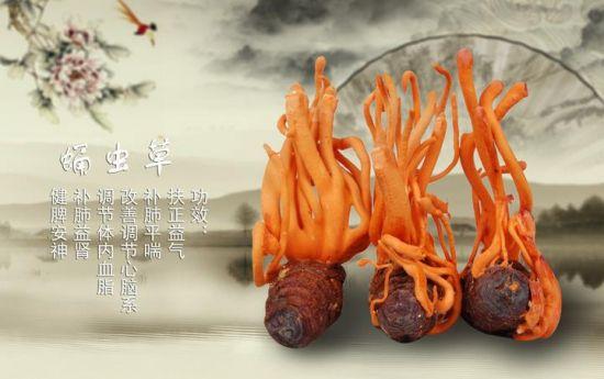 蛹虫草的价格:平均价在500元/公斤左右