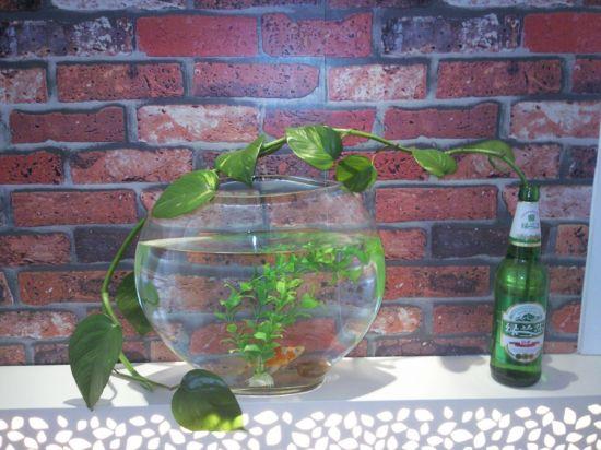 绿萝与小鱼图片
