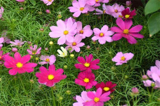 代表勇气和坚强的植物图片:十种顽强生长的花朵