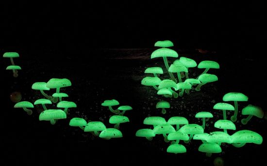 会发花的小蘑菇