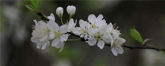 4月有什么花开?盘点十大四月份开花的植物