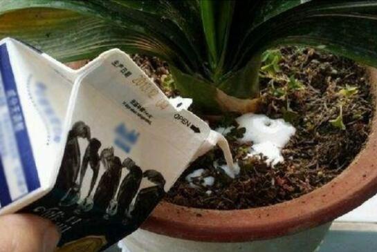 盆栽土壤板结的原因和解决方法