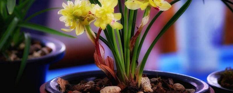 兰花什么时候开花