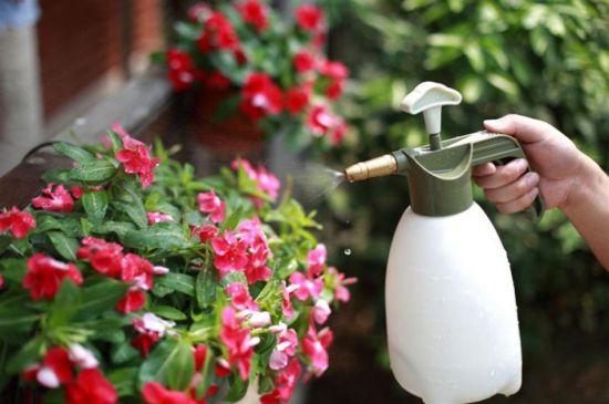 家庭养花技巧|自制天然杀虫剂