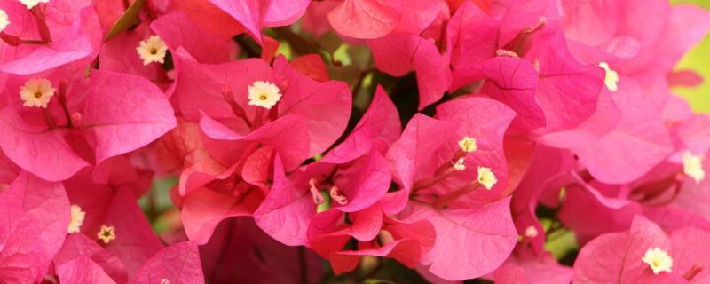 <b>深圳市花是什么?</b>