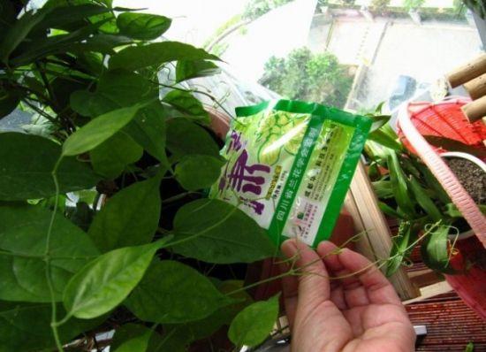 给盆花施肥