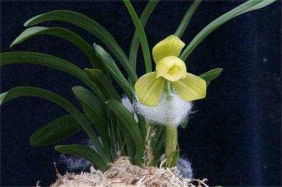什么兰花品种价格最贵?十种昂贵品种兰花图片,最贵1400万