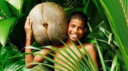 植物界最大的种子