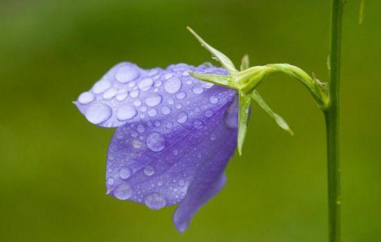 9大适合秋天种的植物