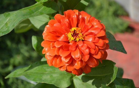 7种在秋天开放的橙色花朵