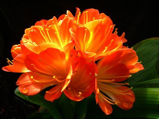 养花技巧|如何让花不黄叶不烂根