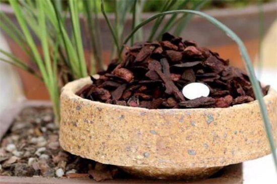 最简单的兰花植料配置,每层土壤有不同的要求