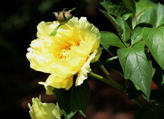 西南方五行属土——宜养黄色花卉