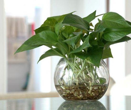 南方五行属火——宜养绿色植物