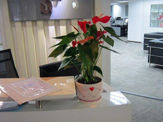 东方五行属木——宜摆放红色花卉