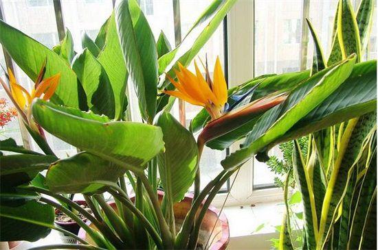 世界上最漂亮的十种花:这十种花独显各自魅力