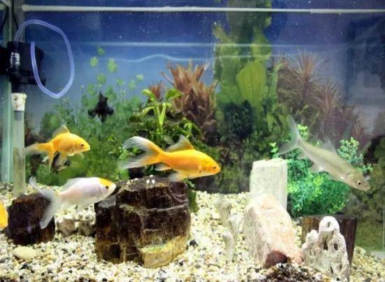 鱼缸中换下的废水