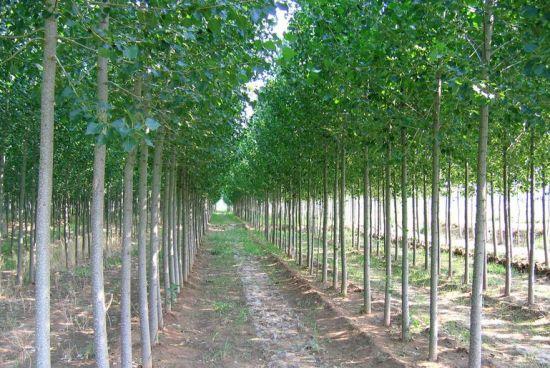 五种具有土壤修复功能的植物