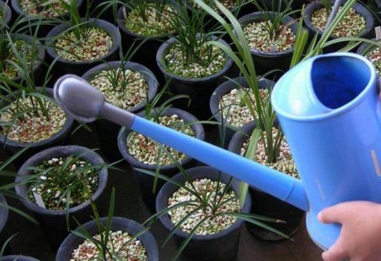 兰花应怎样科学浇水施肥