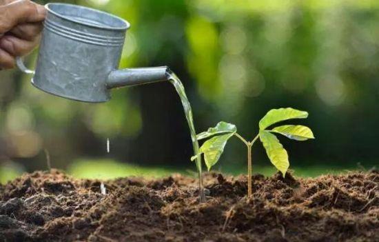 如何判断盆土干湿