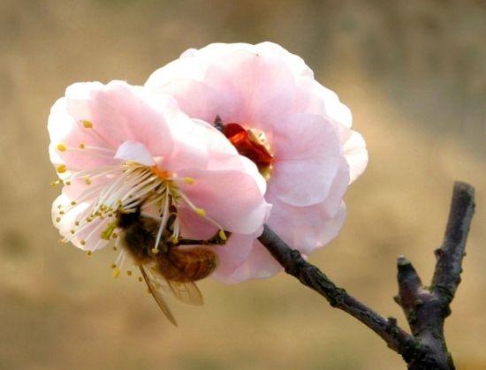 别致的梅花图片