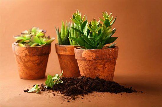 如何自制花肥:手把手教你制作氮、磷、钾纯天然有机肥
