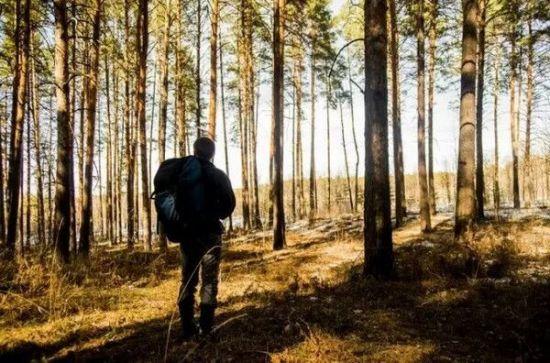 迷失方向看树