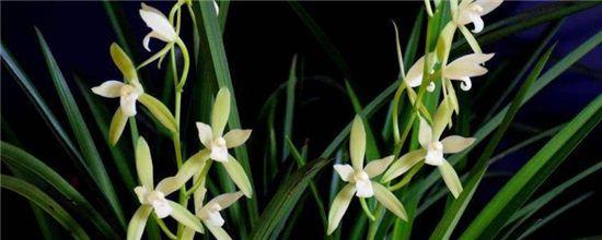春夏秋冬各有什么代表性的花卉