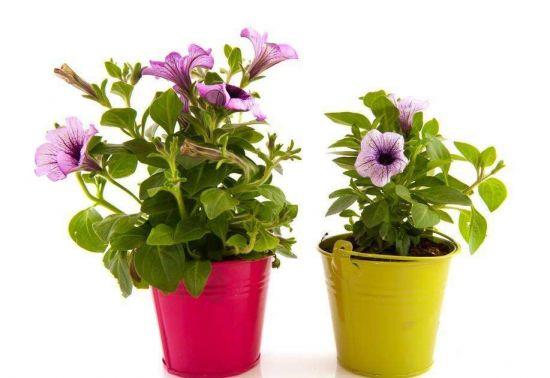 触摸会使植物长不高