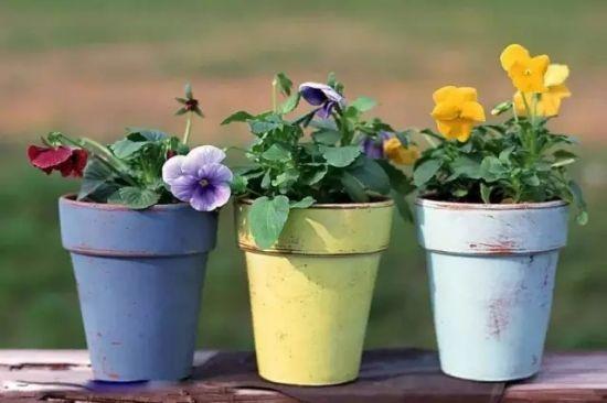 家庭养花怎样正确的选择花盆