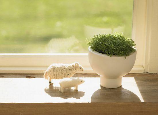 怎样用植物装饰居室